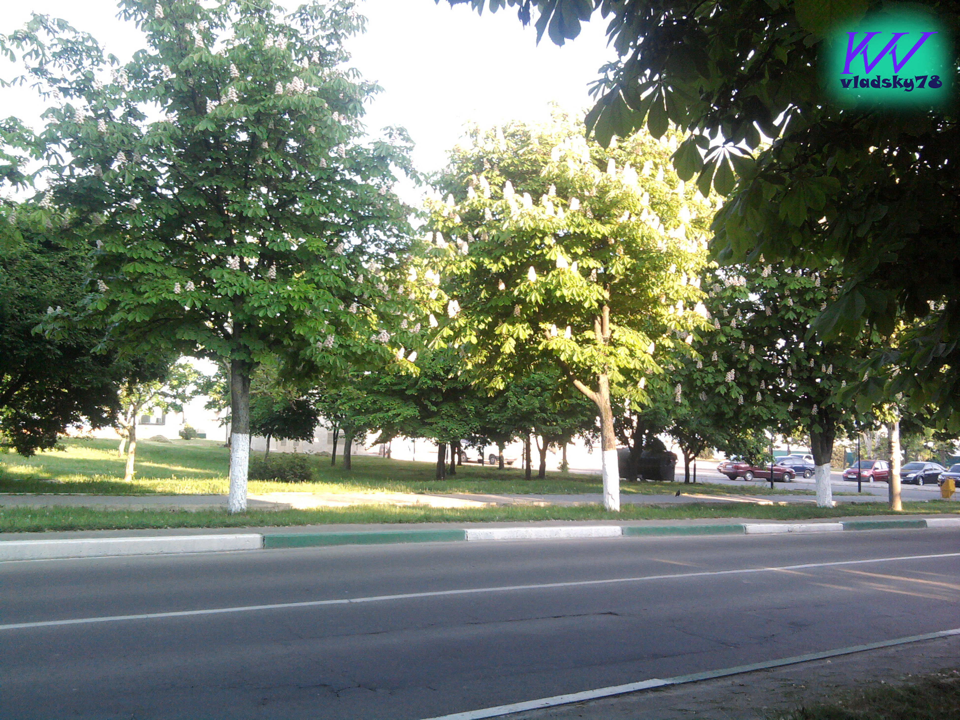 tree, road, no people, green color, outdoors, growth, day, nature, city