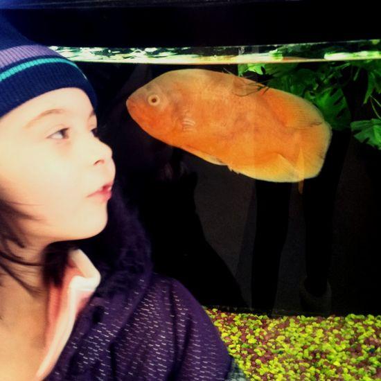 Little Girl mesmerized in Petstore Aquarium Fish Hanging Out Petstore Petstore Trip Orange Fish Real People