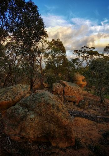 🌄 https://en.wikipedia.org/wiki/Bunjil 👈 To understand the significance of this site spend a couple of minutes visiting the link. 🙏 Bunjil's Shelter Black Ranges Aboriginal Sacred Site This is just a short drive from my daughter's home. ...I love cycling or driving here in the mornings, waiting for the Sun to transform everything. It is a magical place. If you sit quietly Kangaroos, Wallabies and birds (Sulphur Crested Cockatoos, Crimson Rosellas, Loraquets, Blue Wren and many many others) begin to emerge. As I only take my android with me, getting quality shots of them is difficult! The Great Outdoors With Adobe Spirit Of The Bush Australian Landscape Landscape_Collection Rock Formation The Great Outdoors - 2016 EyeEm Awards EyeEm Gallery Sacred Places AndroidPhotography Eye4photography  The Nature Photographer - 2016 Eyeem Awards Enjoying Life Australia❤️ Mobilephotography EyeEm Best Edits EyeEm Nature Lover Exceptional Photographs Eucalyptus EyeEm Best Shots