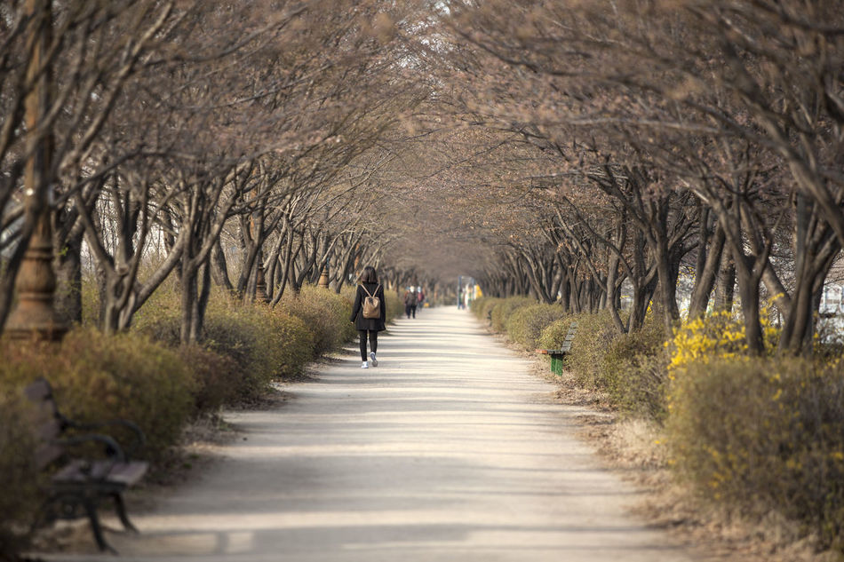 Anyangcheon Beauty In Nature Diminishing Perspective Dirt Road Empty Footpath Forsythia Growth Long Narrow Nature Outdoors Pathway Road Scenics Springtime The Way Forward Tranquil Scene Tranquility Tree Treelined Vanishing Point Walkway Walkwaywhy