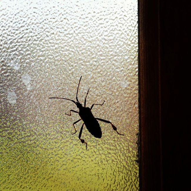 Toomanybugs Bathroomguest