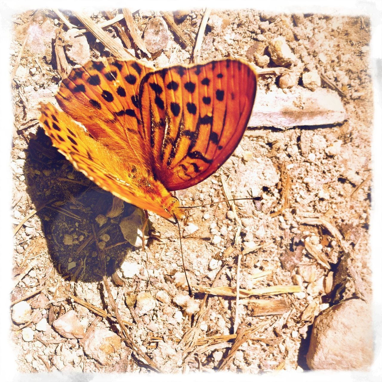 insect, one animal, butterfly, animal themes, animals in the wild, nature, butterfly - insect, wildlife, leaf, no people, change, close-up, outdoors, day, fragility, animal markings, beauty in nature, flower head