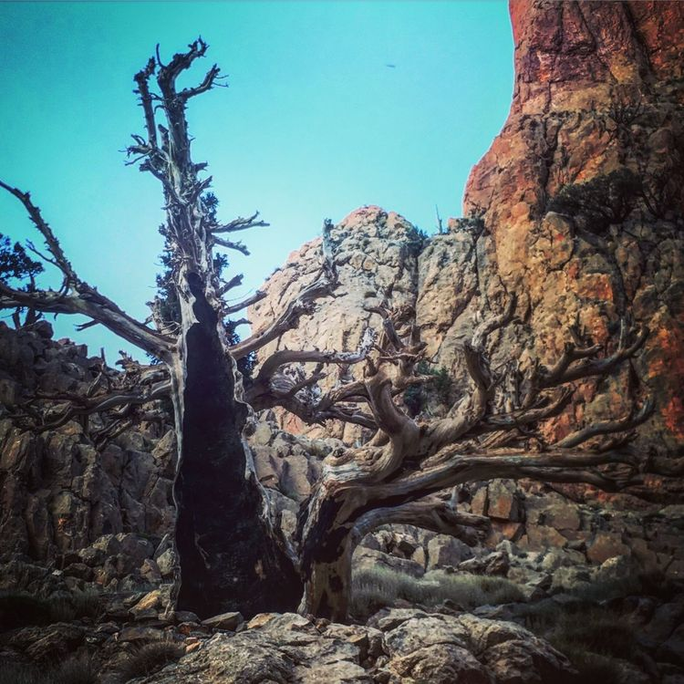Nature Mountain Beauty In Nature Adventure Hiking Tree Fire Died Tree Rocky Mountains