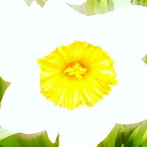 Flowers Nature Kingsheathpark Spring Springwalk Spring2014