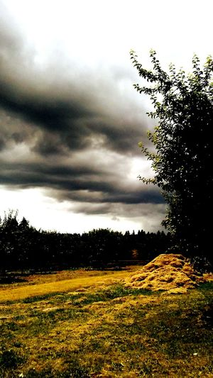 Trees Trees And More Trees Hello World Award Winning Photos The Great Outdoors - 2016 EyeEm Awards Enjoying Life Rays Of Light Lovely Weather Storms A Brewin! On My Walk Today Nature Colors Of Nature