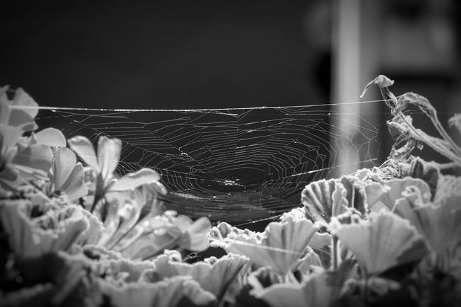Fragility No People Nature Close-up Sony A7rm2 Luca Riva Ritocco  Sony 42mpx Mark2 Sony A7 Mark Ii Net Spider Spiderworld Spidernet