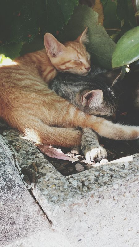 Cats Brothers Summertime