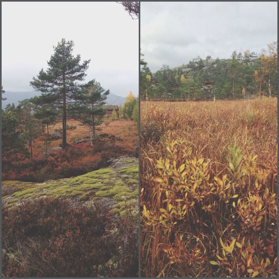 Walking Solheia Autumn Colors Enjoying Life