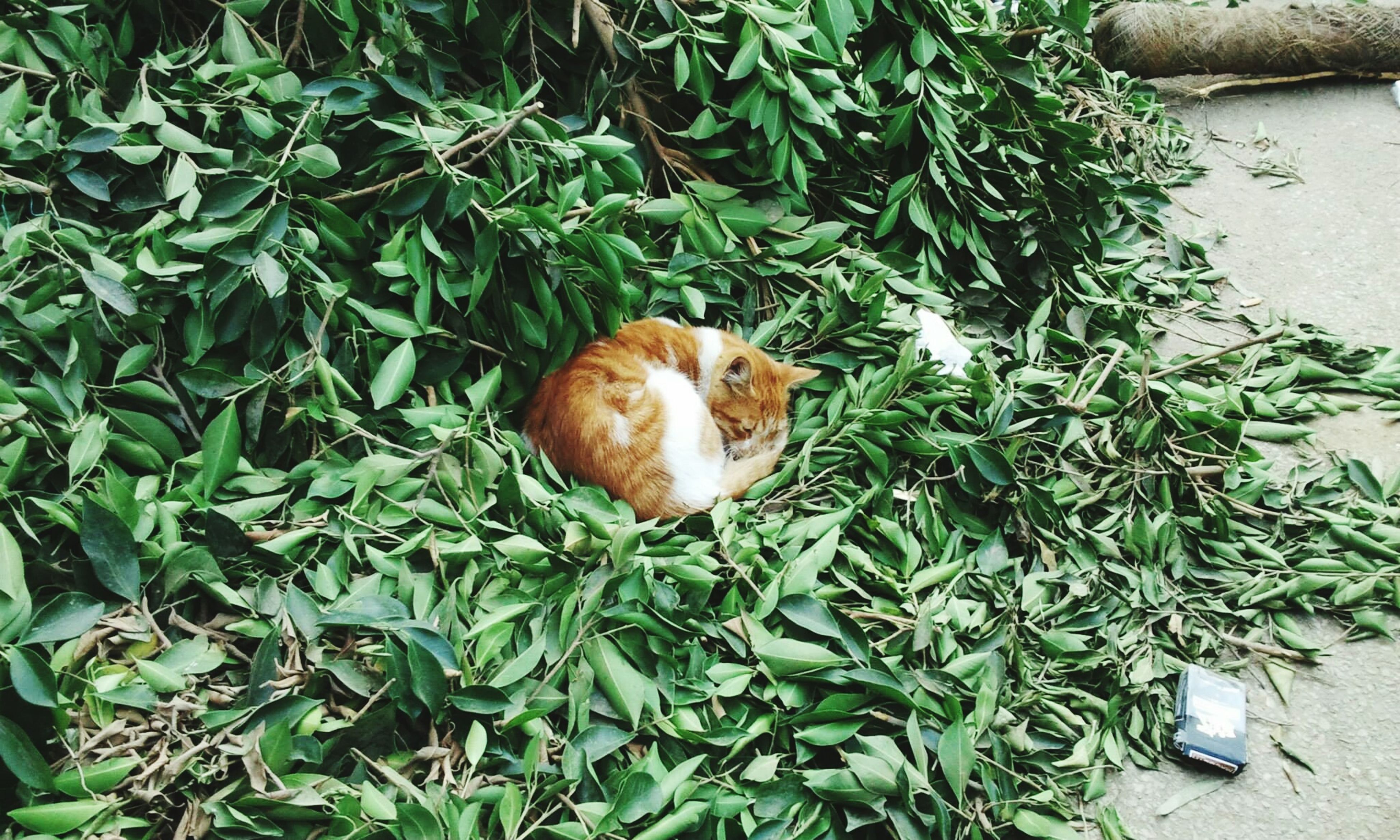 animal themes, one animal, plant, green color, mammal, leaf, pets, growth, domestic animals, high angle view, domestic cat, cat, grass, relaxation, nature, no people, outdoors, day, feline, sunlight