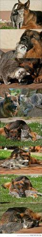 Jerry Tom Jerry ♥ Friends Happy :)