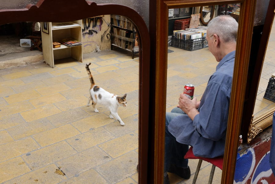 Athens, Greece Cat Walking Mirror Reflection The Week On EyeEm Animal Themes Athens Flea Market Candid Photography Cat Day Domestic Animals Domestic Cat Europe Lifestyles Mature Adult Mirror Reflection One Animal One Person Outdoors People Pets Real People Sitting Street Photography Street Scene
