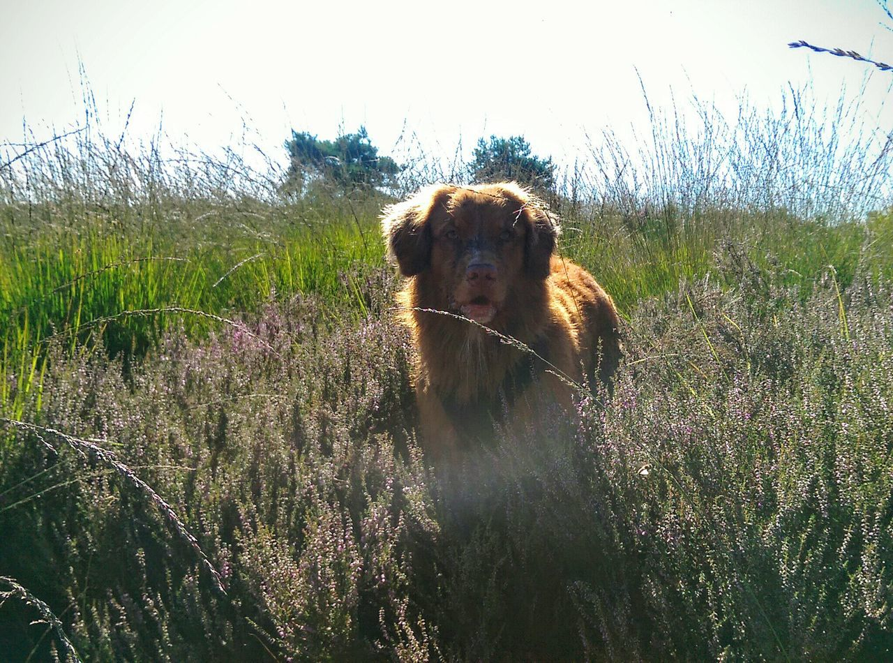 Into Nature Forestwalk Dog Photography That's Me Hello World Enjoying Life Having Fun Nature Relaxing Plants Wild Grass Trees Landscape Sunlight Furryfriend Dog Nova Scotia Duck Tolling Retriever Outdoors