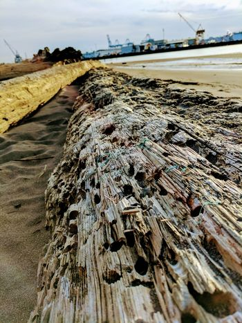 Sky Sea Outdoors Nature Beach Coastline No People Cloud - Sky Scenics Water Day Beauty In Nature SeattleLife Washingtonstate Beach Photography Freshness Nature Wood - Material Textured  Log