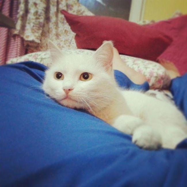 Cat Efes Yirimmmmm