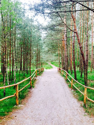 Walking Together A Walk In The Woods Green Green Green!  Nature Naturelovers Landscape_Collection