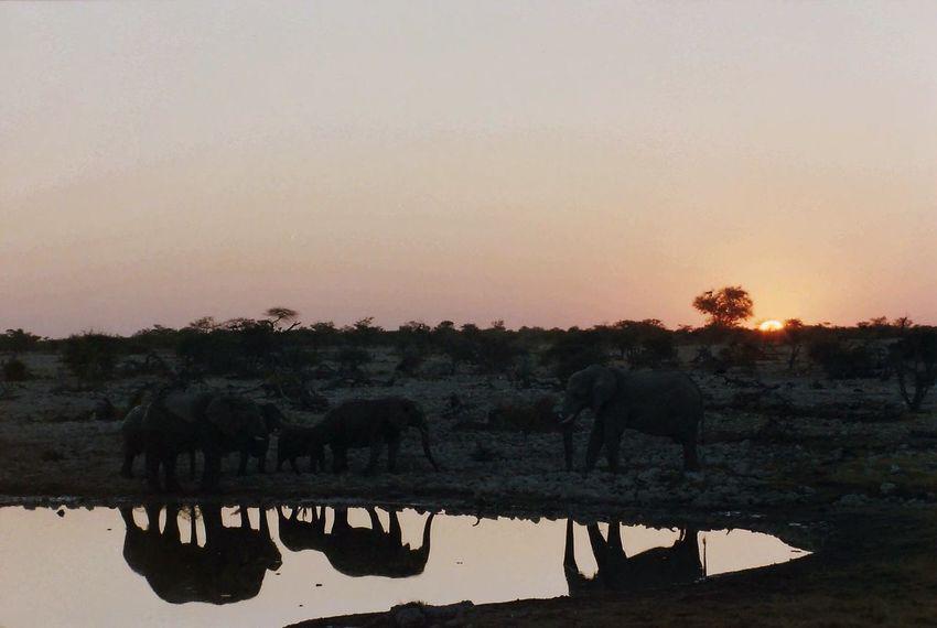 The KIOMI Collection etosha Namibia