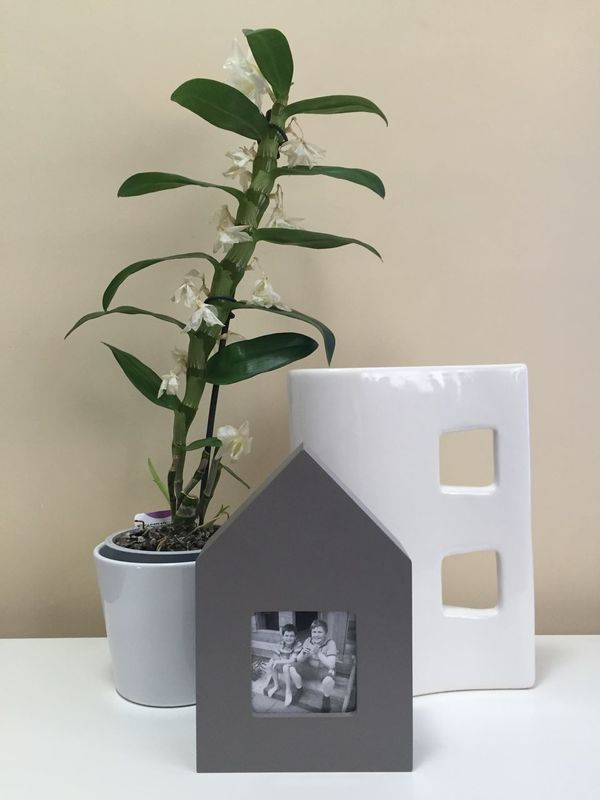 Plant Plantpot Plant Pot White Green Flowers Flower Photo Photoframe Photo Frame Frame Grey Gray Picture Pictureframe Picture Frame House Vase Squares Square Home Home Furnishing Home Furniture Ornaments At Home