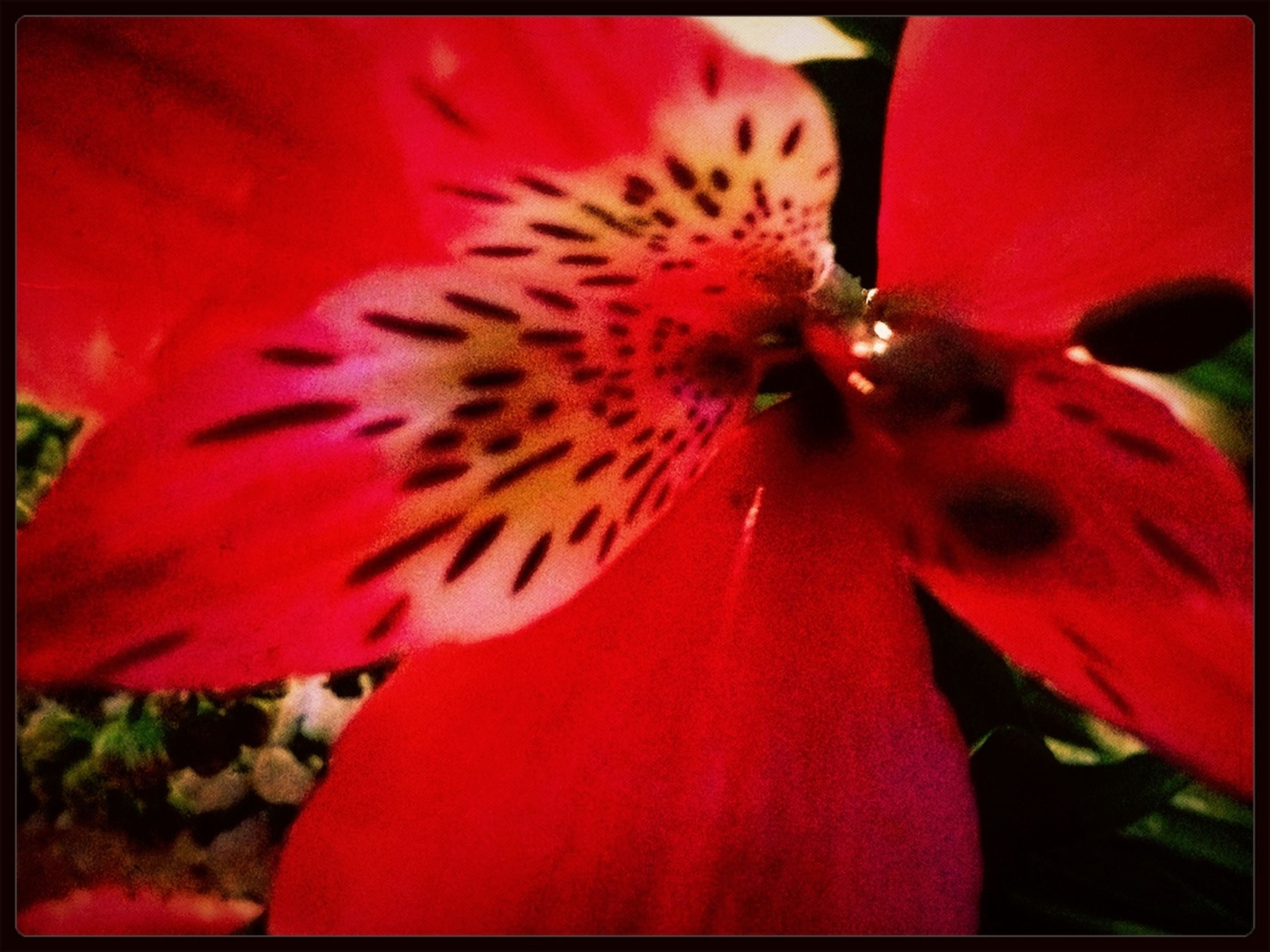 transfer print, red, auto post production filter, flower, one animal, animal themes, freshness, close-up, petal, wildlife, fragility, insect, flower head, beauty in nature, animals in the wild, nature, selective focus, focus on foreground, growth, pollen