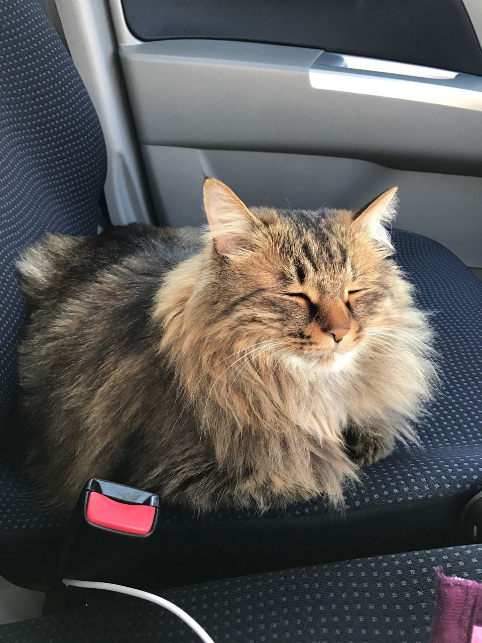 car, mode of transport, transportation, land vehicle, vehicle interior, domestic cat, pets, car interior, domestic animals, one animal, mammal, feline, vehicle seat, animal themes, no people, sitting, day