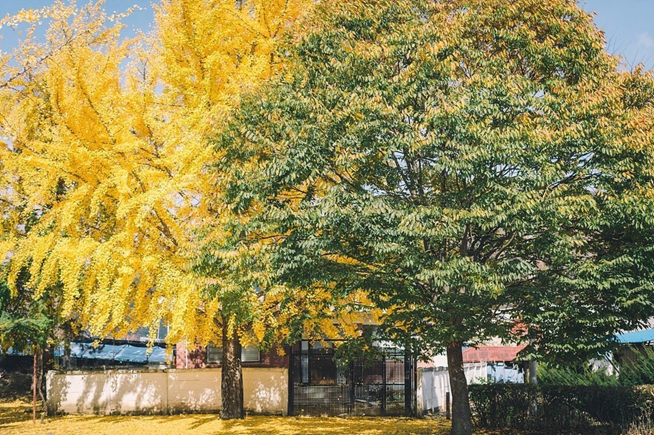 tree, autumn, change, leaf, outdoors, building exterior, day, architecture, built structure, no people, nature, yellow, growth, beauty in nature, sky