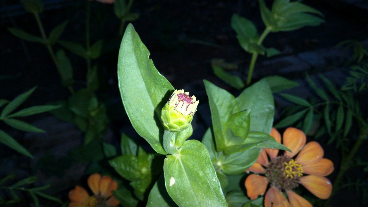 Sepal Flower Leaf Growth Freshness Plant Beauty In Nature Petal Indiaphotos Wow That's So Cool !! Green Springtime Night Photography Fresh On Eyeem
