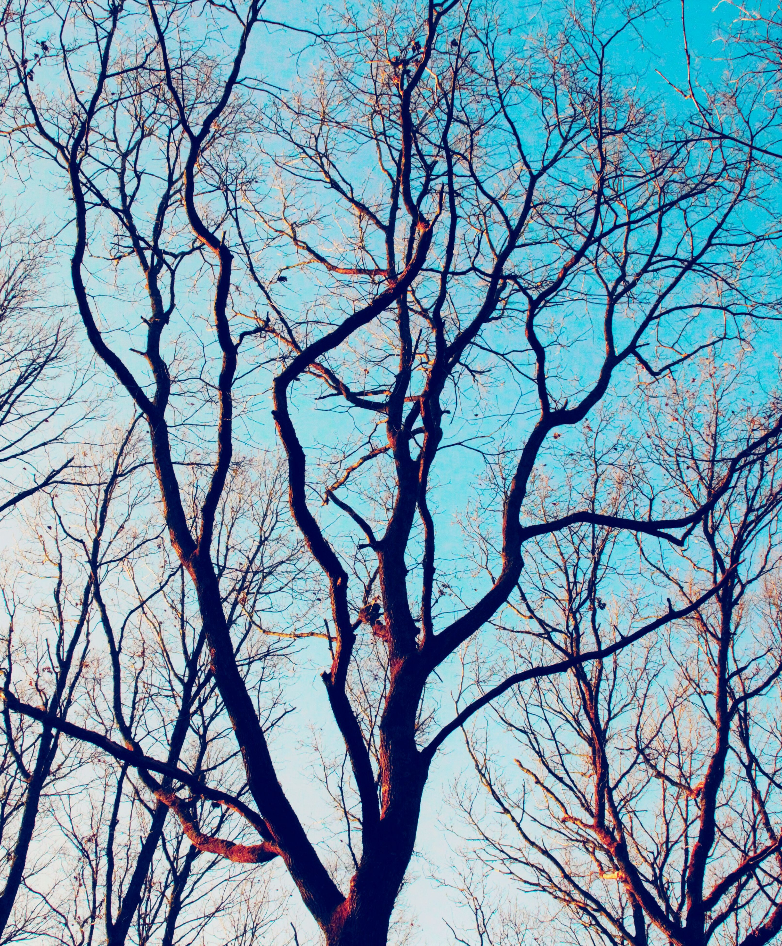 bare tree, branch, tree, low angle view, blue, sky, tranquility, nature, beauty in nature, clear sky, scenics, tree trunk, outdoors, backgrounds, silhouette, no people, day, full frame, tranquil scene, growth