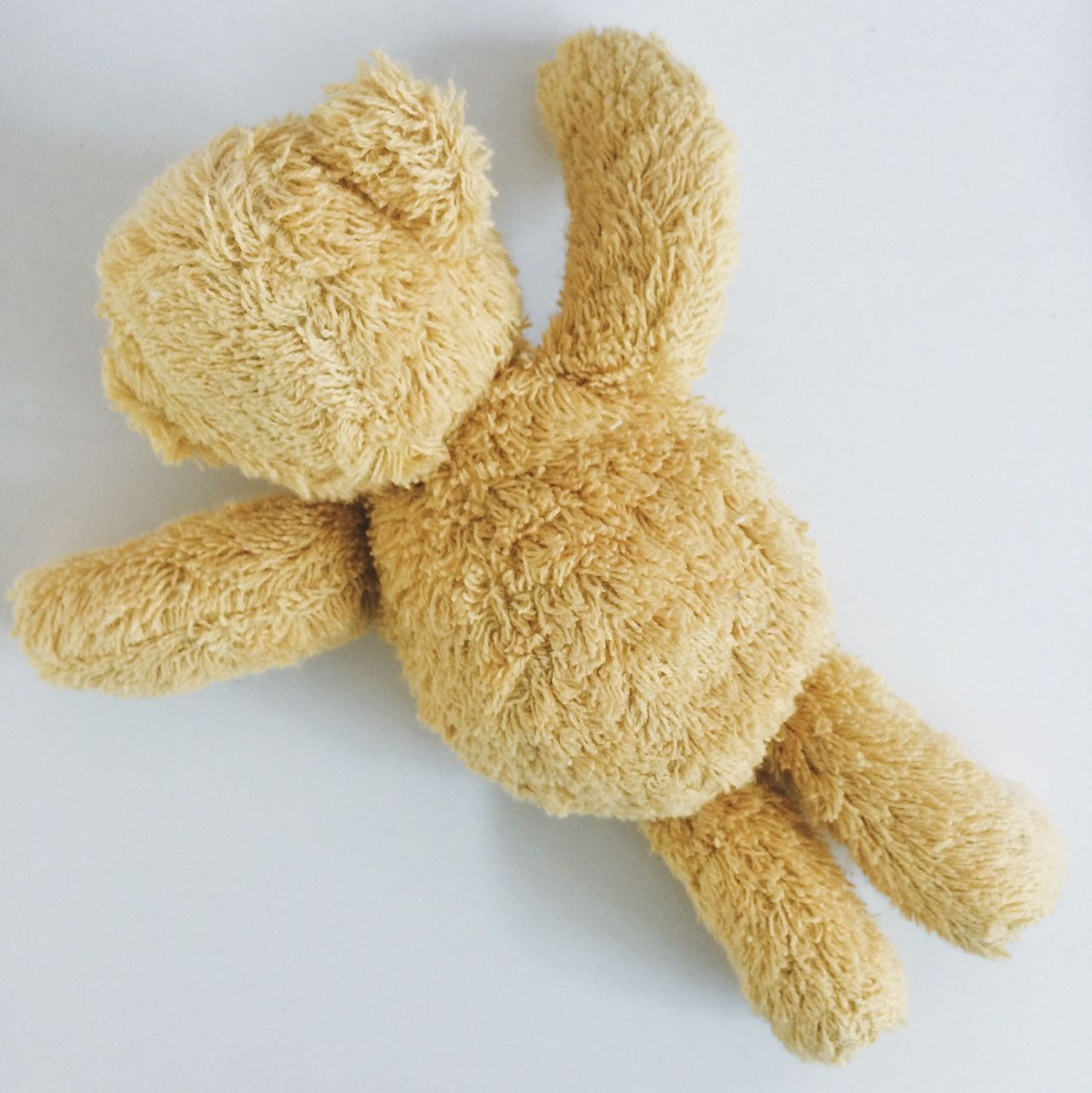 Beautiful stock photos of teddy bear, Berlin, Copy Space, Cut Out, Germany