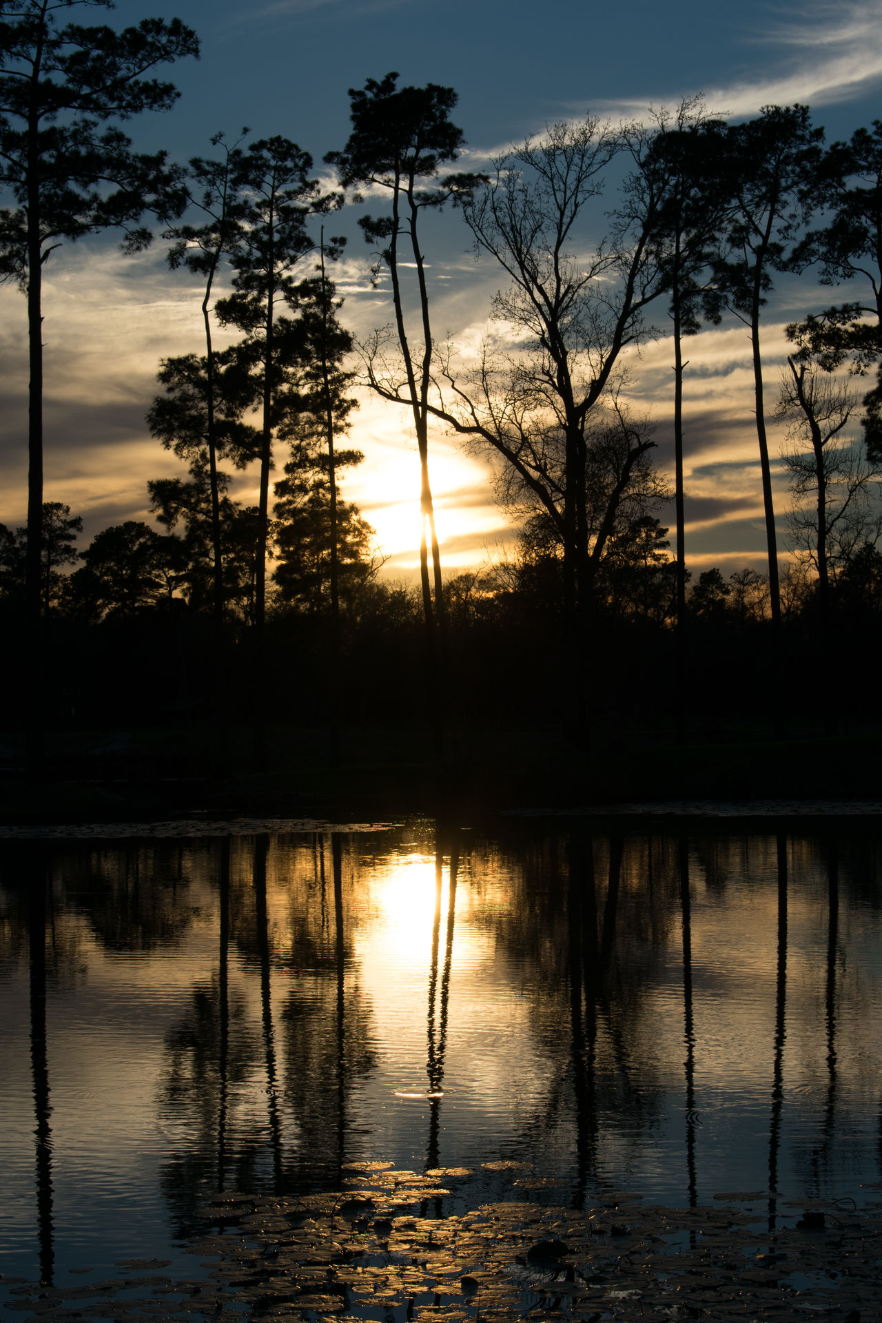 Backgrounds Beauty In Nature Day Lake Nature No People Outdoors Reflection Silhouette Sky Sun Sunset Tranquility Tree Vacations Water