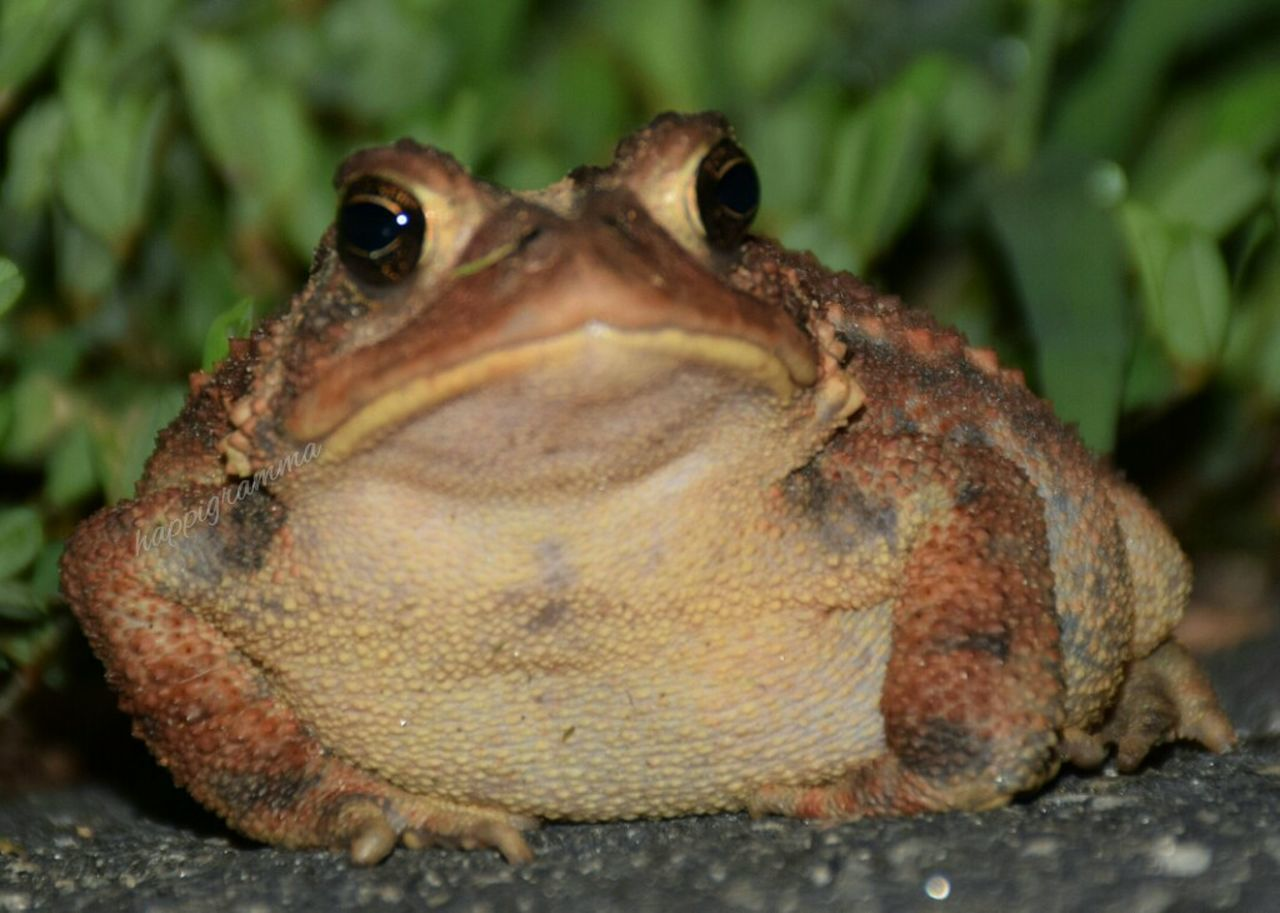 my prince, kiss a toad Check This Out Hello World Cheese! Hanging Out Ribbit Prineccharming
