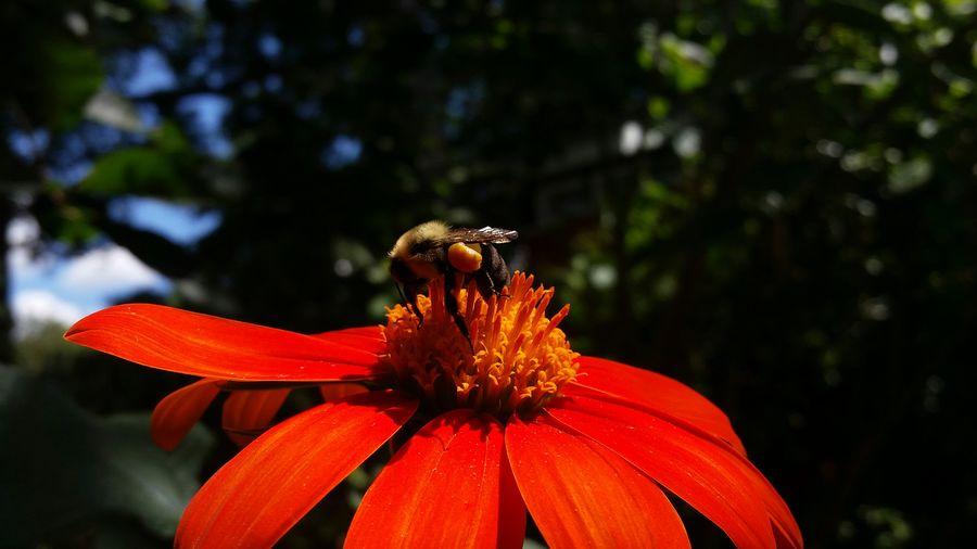 Bee Flower Nature Qbg GalaxyS5