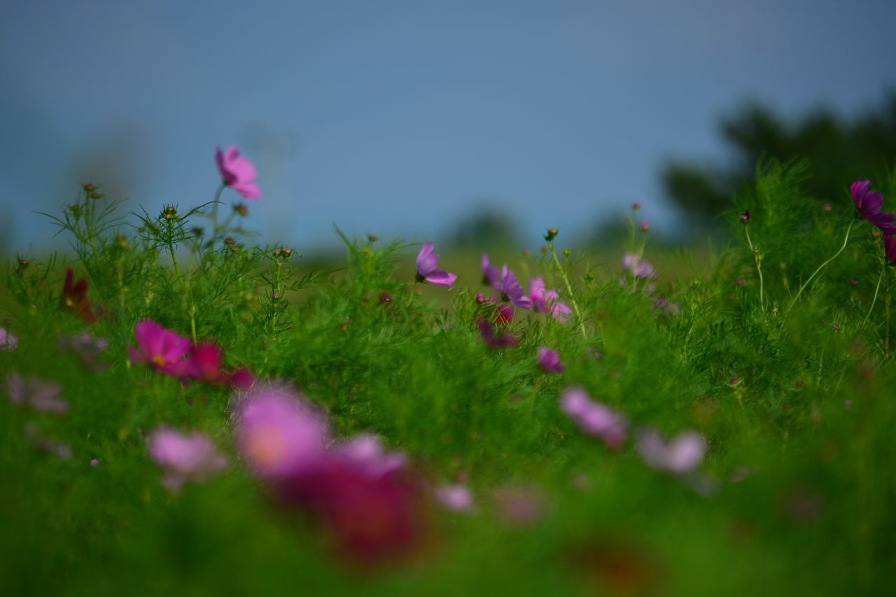 Beautiful stock photos of meadow, Beauty In Nature, Clear Sky, Day, Flower