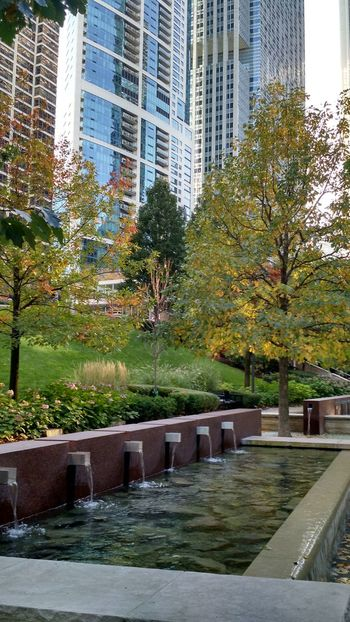 Water Built Structure Building Exterior Architecture Growth Tree Reflection City Day Green Color Outdoors No People Nature Tranquility Chicago Architecture City Park Urban Skyline Beauty In Nature Adapted To The City