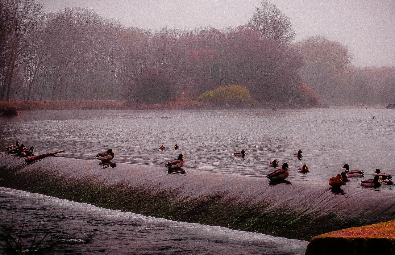 water, nature, tree, outdoors, beauty in nature, real people, men, large group of people, day, lake, leisure activity, tranquility, lifestyles, fog, scenics, sky, bird, people