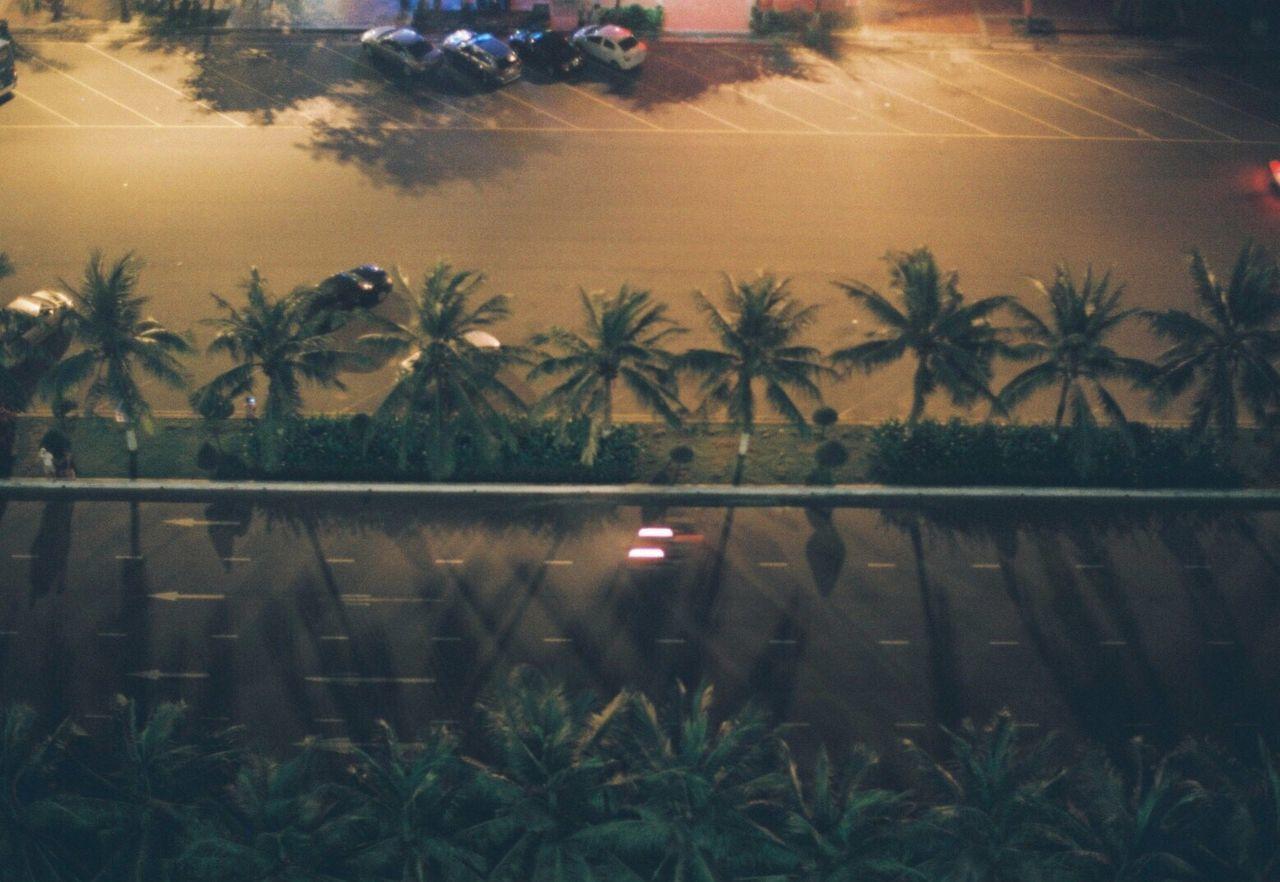 35mm Film Filmisnotdead Film Photography Filmcamera Palm Tree