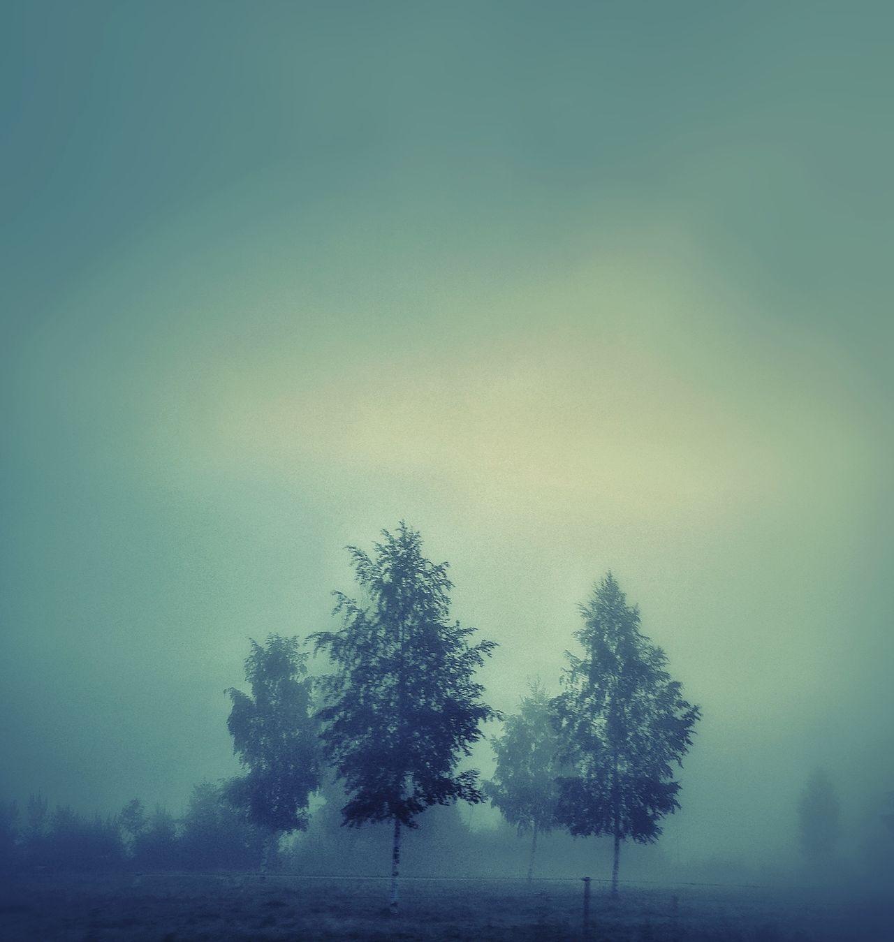 EyeEm Nature Lover EyeEm Best Shots - Landscape On The Road ! EyeEm Best Shots - Trees