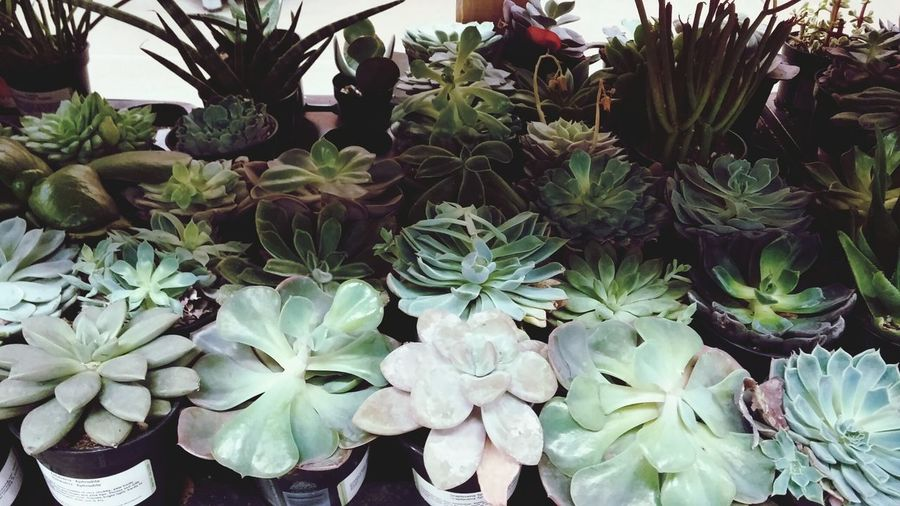 baby succulents Baby Succulents Plant Succulent Plant Green Home Depot Decor Open Edit Neutral Life