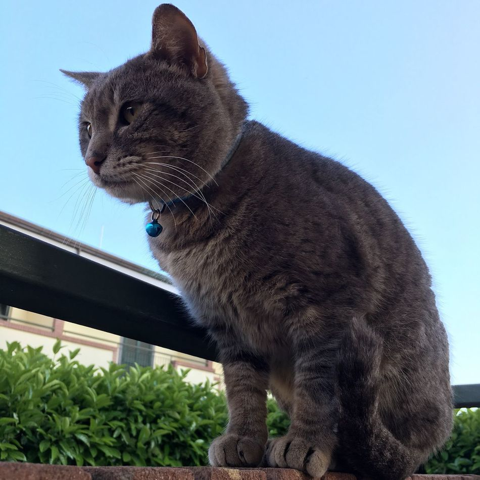 Ugo Nofilter Cat Nature Grey Sky Hello World Lovely Adorable Green Eyes