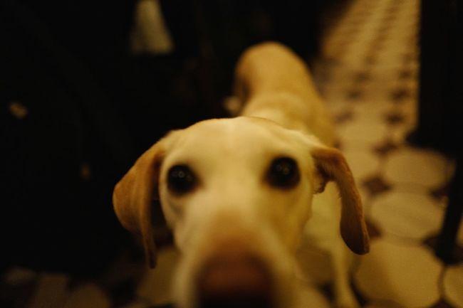 Dog Close-up Blurry