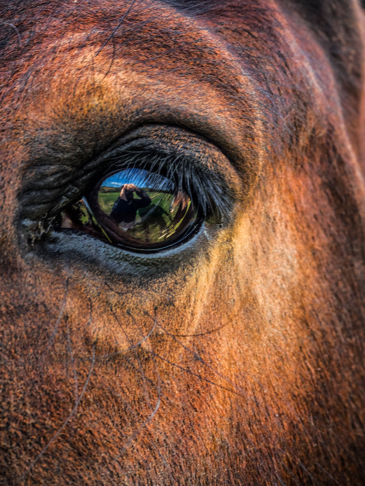 One eye sees, the other feels. Paul Klee. Animal Body Part Animal Eye Animal Hair Backgrounds Close-up Domestic Animals Extreme Close Up Extreme Close-up Focus On Foreground Full Frame Horse Livestock Looking No People One Animal Part Of Portrait Reflection