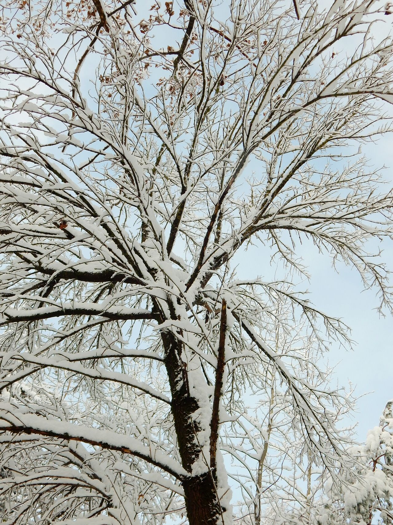 Tree Nature Branch Sky Low Angle View Outdoors No People Growth Tranquility Beauty In Nature Bare Tree Day Close-up Backgrounds Non-urban Scene Snow Riga Latvia Forest Beauty In Nature GrowthWinter Nature Tree