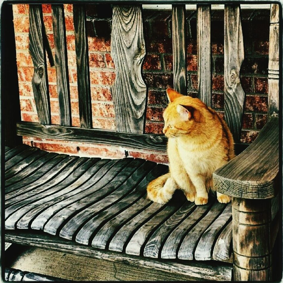 honey ❤ Cat Frontporch Porchswing