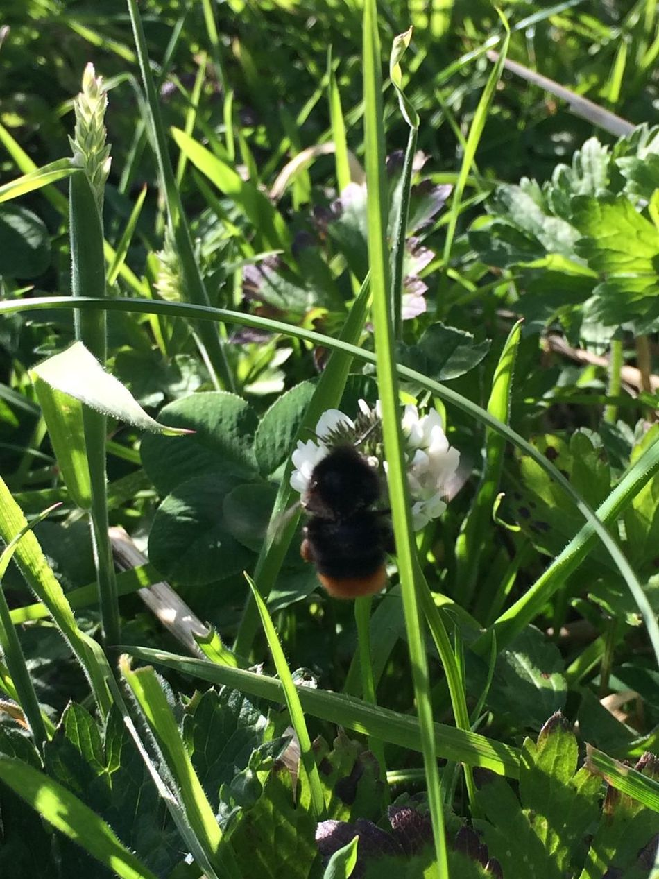 Nature On Your Doorstep IPhoneography Bumblebee Natureupclose