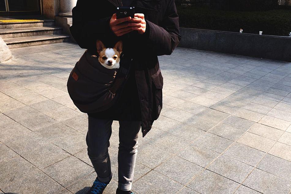 Beautiful stock photos of seoul, Animal Themes, Bag, Day, Dog