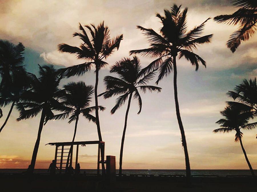 Palm Tree Sunset Sea Water Beach Tree Silhouette Reflection Weather Outdoors Landscape Sky Nature Cloud - Sky Dramatic Sky No People Beauty In Nature Postcard Day Jamarysantanafoto Nikonphotographer Pernambucoemfoco