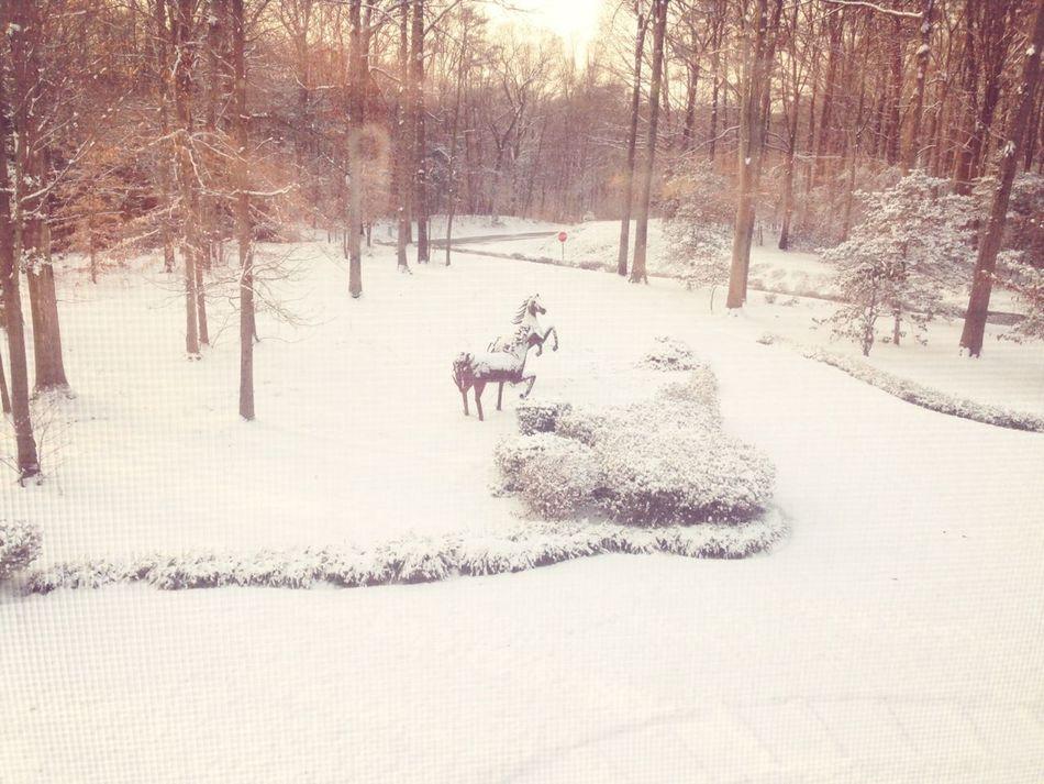 Snow pic ❄