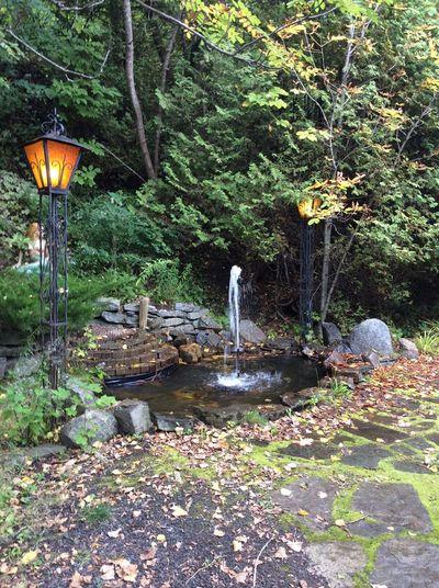 Fall l Light Backyard