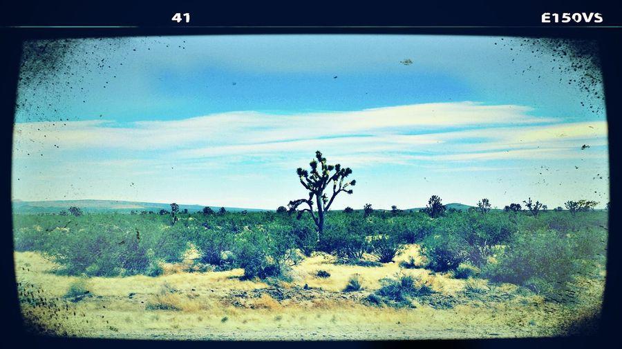 Desert Beauty Road Trip Sky And Trees Beautiful Nature