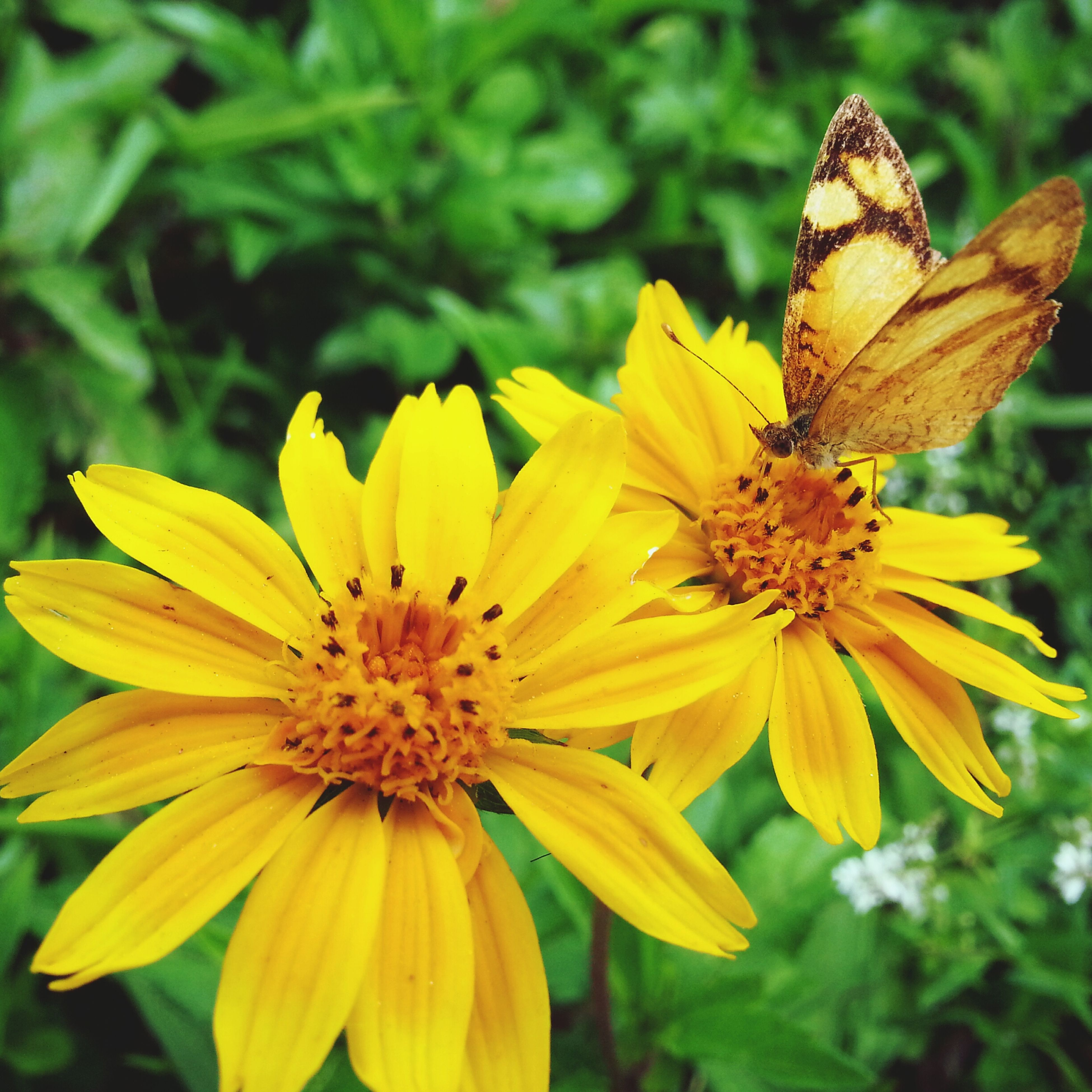 flower, petal, yellow, freshness, insect, flower head, fragility, one animal, focus on foreground, animal themes, animals in the wild, close-up, beauty in nature, growth, pollen, wildlife, nature, plant, blooming, pollination