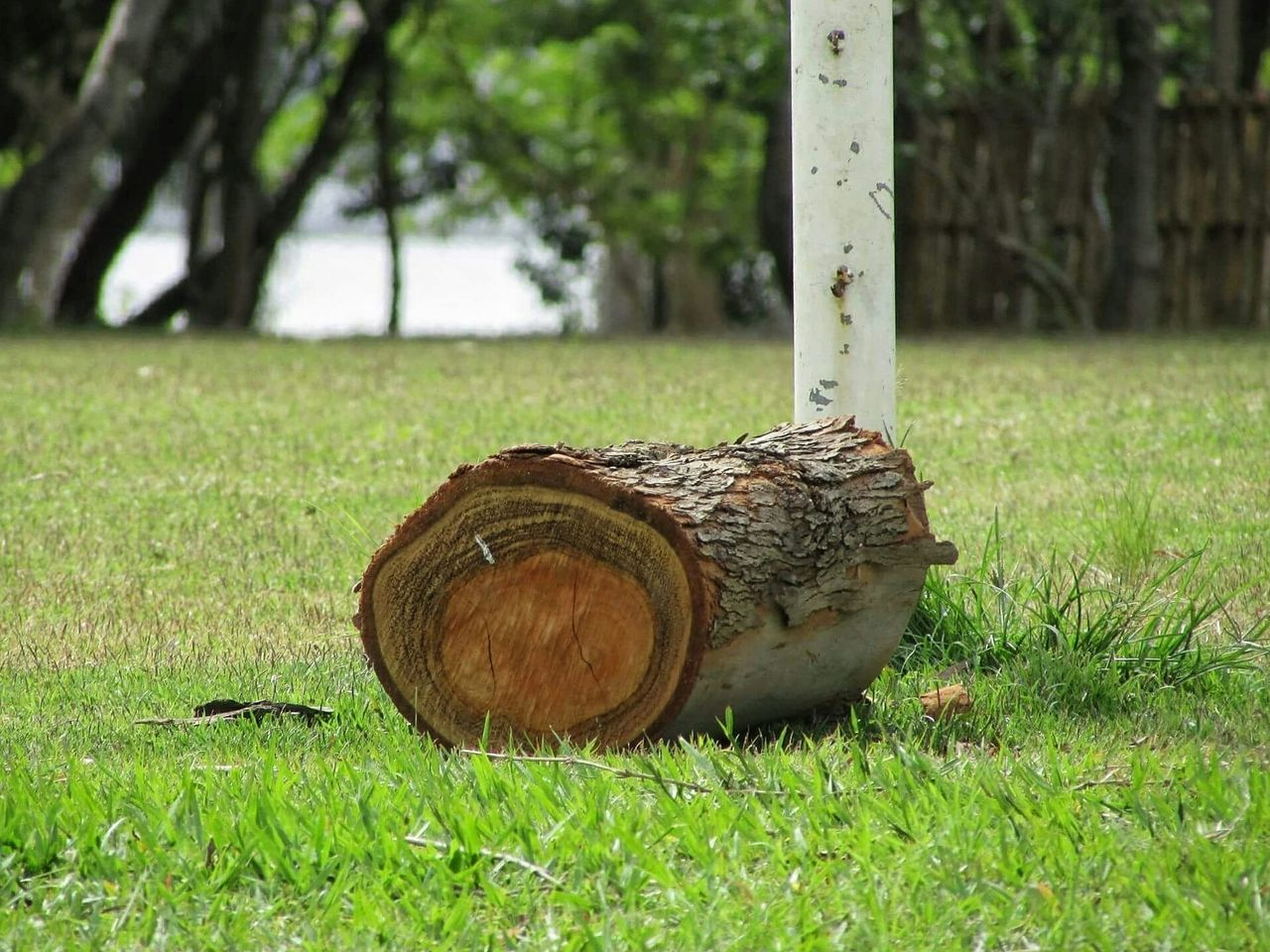 grass, day, outdoors, green color, no people, field, nature, tree, barrel, close-up