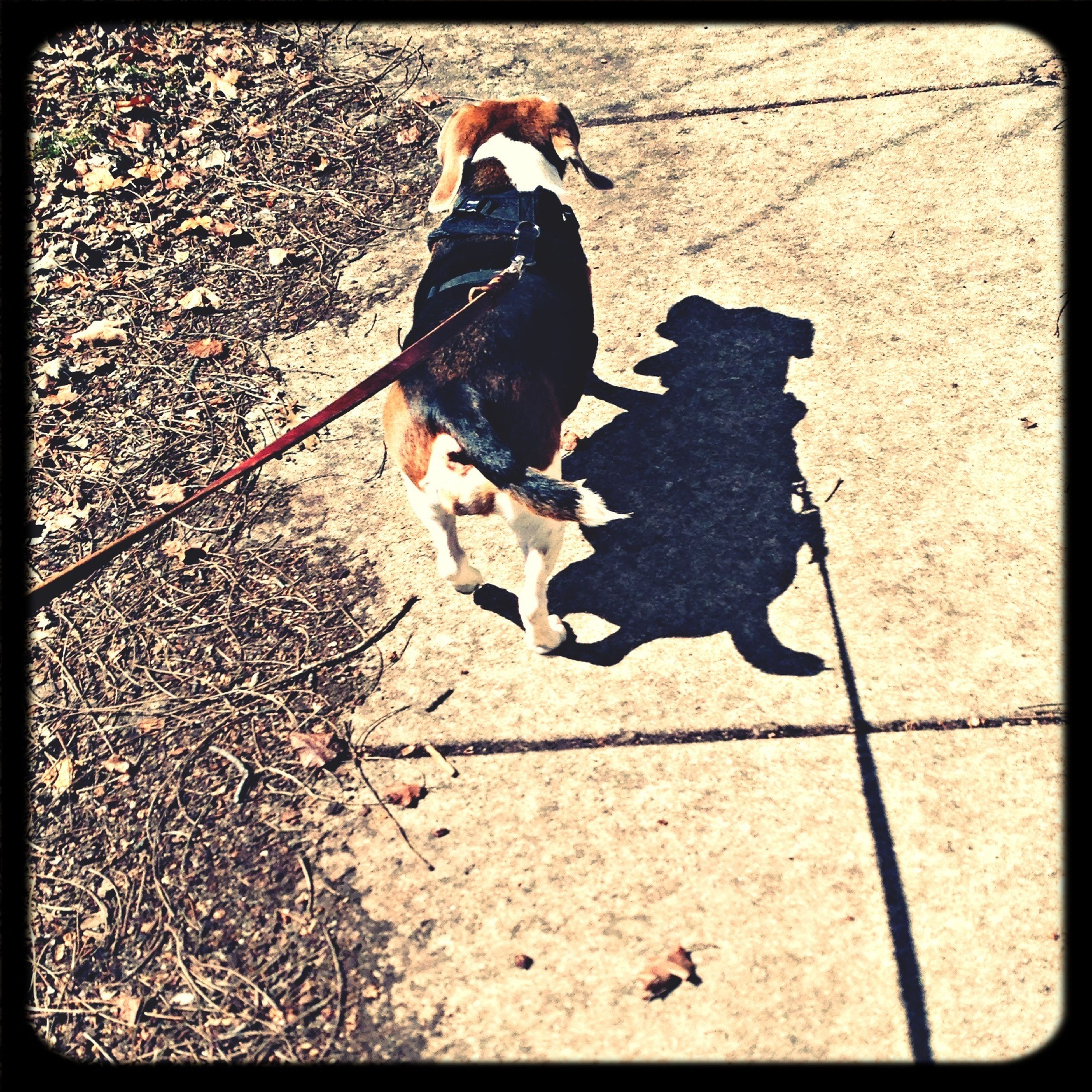 transfer print, auto post production filter, high angle view, street, sidewalk, shadow, outdoors, animal themes, men, day, lifestyles, ground, cobblestone, sunlight, road, one animal, full length, low section